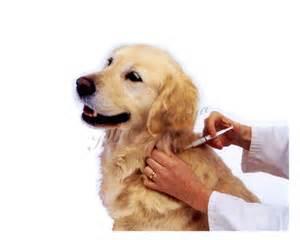 Dog needle